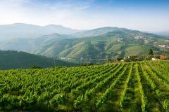 Vinhedos nos montes verdes Vale de Douro Fotografia de Stock