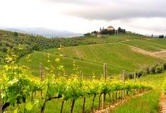 Vinhedos orgânicos em Toscânia, Itália Fotografia de Stock Royalty Free