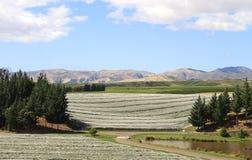 Vinhedos protegidos em Nova Zelândia Fotografia de Stock Royalty Free