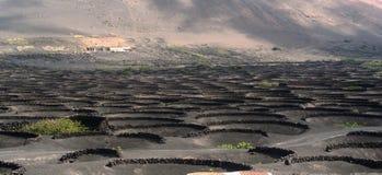 Vinhedos sob o vulcano Imagem de Stock Royalty Free