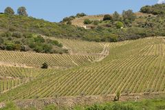 Vinhedos Terraced do Douro River Valley Fotografia de Stock