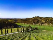 Vinhedos Terraced nos montes de Tuscan Foto de Stock
