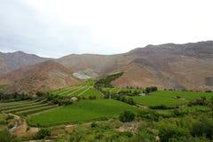 Vinhedos usados para Pisco no vale seco de Elqui, o Chile imagem de stock royalty free