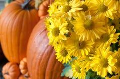 Vinheta da queda com as flores e as abóboras amarelas do crisântemo em Front Porch foto de stock royalty free