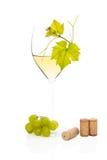 Vinho branco no vidro de vinho. Fotografia de Stock Royalty Free