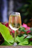 Vinho branco tropical imagens de stock royalty free