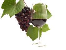 Vinho das uvas Imagem de Stock
