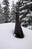 Vinho de refrigeração Foto de Stock Royalty Free