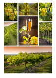 Vinho do mosaico Foto de Stock Royalty Free