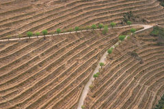 Vinho do Porto Imagem de Stock Royalty Free