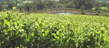 Vinho do vinhedo produzindo a região Imagens de Stock Royalty Free