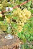 Vinho e uva de vidro Foto de Stock Royalty Free