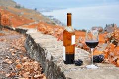 Vinho e uvas contra o lago geneva Fotos de Stock Royalty Free