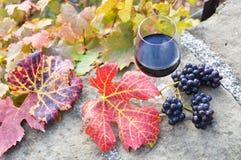 Vinho tinto e uvas Imagens de Stock