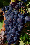 Vinho vermelho vermelho imagens de stock royalty free