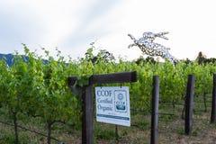 Vinhos orgânicos certificados Fotos de Stock