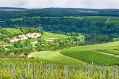 Vinicolo sulle colline in estate Fotografia Stock