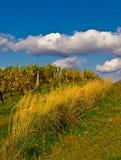 Vinicukulture on autumn Stock Photos