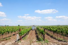 Viniculture Royalty Free Stock Photos