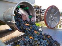 Vinificazione del destemmer del frantoio della cavaturaccioli con l'uva fotografia stock libera da diritti