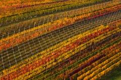 Vinificazione in Europa Di Autumn Rows Of Vineyards colorato Multi geometricamente individuato Fondo astratto con Autumn Colorful fotografia stock