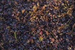 Vinificazione Tecnologia di produzione vinicola immagine stock