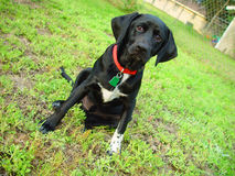 Vink - de hond Stock Foto