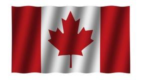 Vinkande flagga av Kanada djur footage Bakgrund lager videofilmer