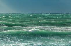Krabbt hav Royaltyfria Foton
