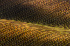 Vinkat kultiverat fält med den härliga ljus-skuggor chiaroscuroen Lantligt höstlandskap i bruna signaler Randig bölja abst Fotografering för Bildbyråer