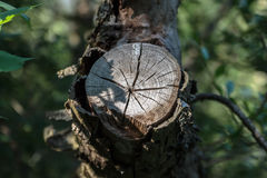 Vinkelrätt foto av ett träd med en snittfilial Royaltyfri Foto