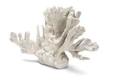 Vinkelskott av vita dekorativa Coral Over en vit bakgrund Royaltyfria Foton