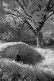 Vinkällare i fält Arkivbilder