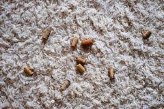 Vinkorkar över vit matta Fotografering för Bildbyråer
