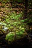 Vinnande sprit av ett träd växte på en vagga Arkivfoto