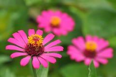 Vinnia-Blume Stockbilder