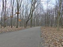 Vinnytsia Park - Forest Royalty Free Stock Images