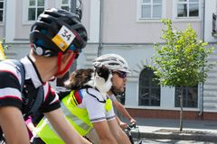Participants of the bike race pay attention to the fact that the cat participates in the race, on t royalty free stock photos