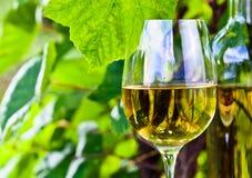 Vino blanco en viñedo Imagen de archivo libre de regalías