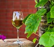 Vino blanco en viñedo Imágenes de archivo libres de regalías
