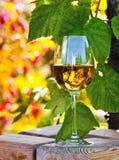 Vino blanco en viñedo Fotografía de archivo libre de regalías