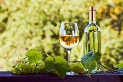 Vino blanco en viñedo Fotografía de archivo