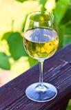 Vino blanco en viñedo Fotos de archivo