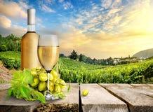 Vino blanco y viñedo Foto de archivo
