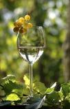 Vino con l'uva Immagini Stock