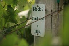 Vino de Chardonnay en un viñedo Imágenes de archivo libres de regalías