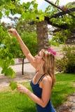 Vino de las uvas de la cosecha de la mujer Fotografía de archivo