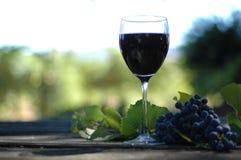 Vino in de Wijngaard Stock Fotografie