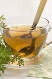 vino di erbe del tè della ruta Immagine Stock