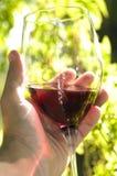 vino di vetro del sommelier della holding Immagine Stock Libera da Diritti